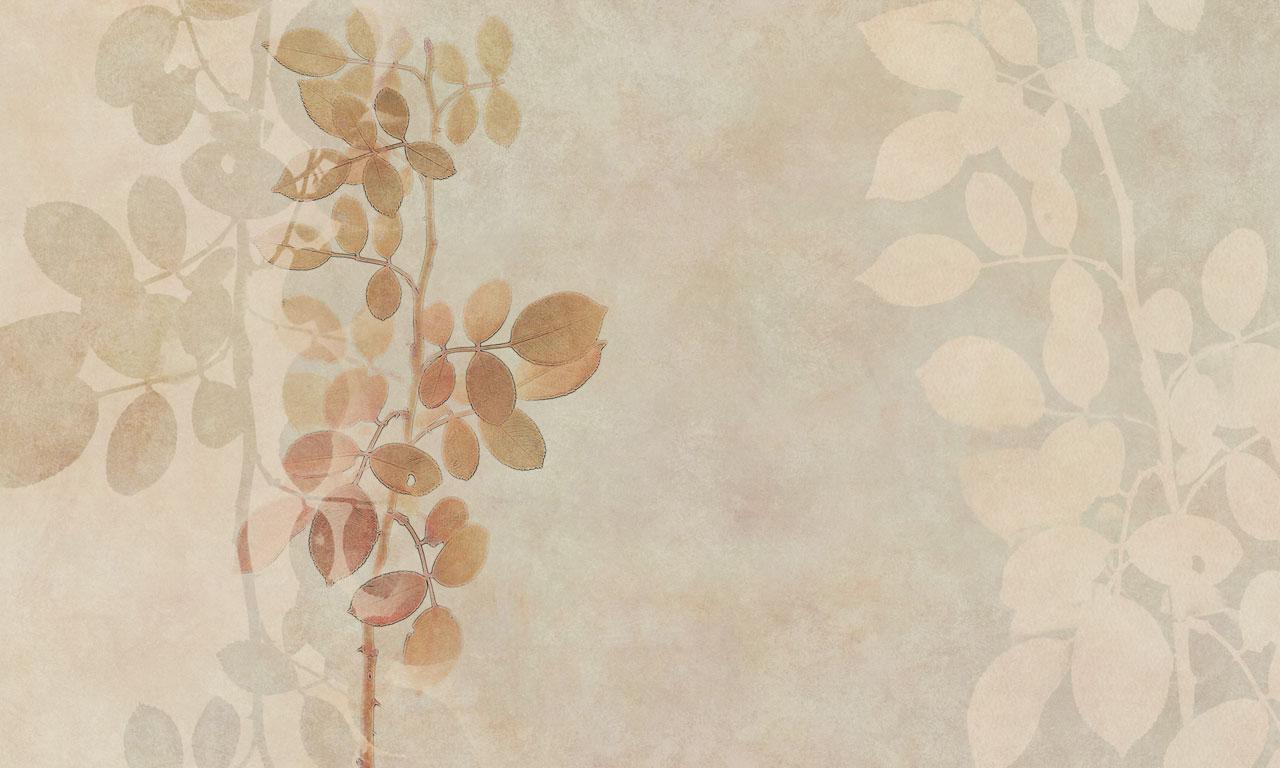 Virginia-Texture
