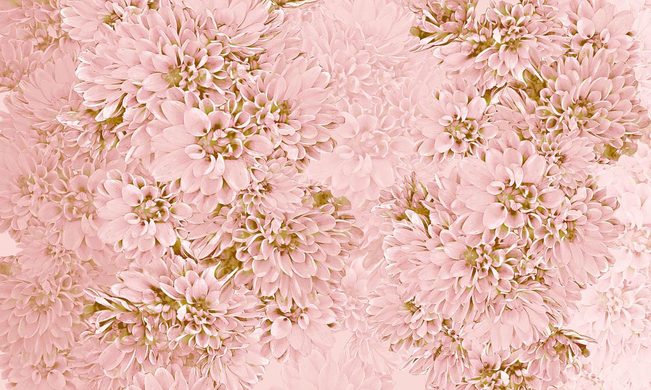 Dahlie-Texture3