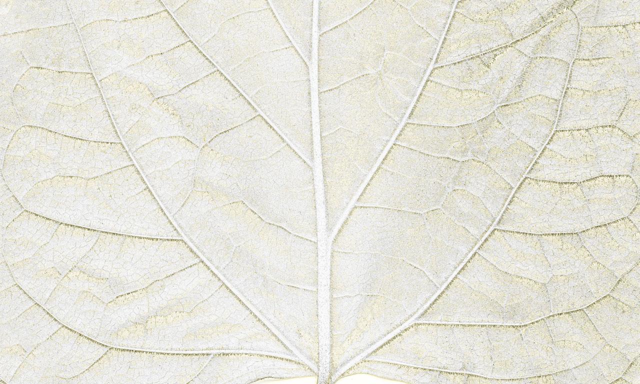 carta-parati-Dahon-texture1