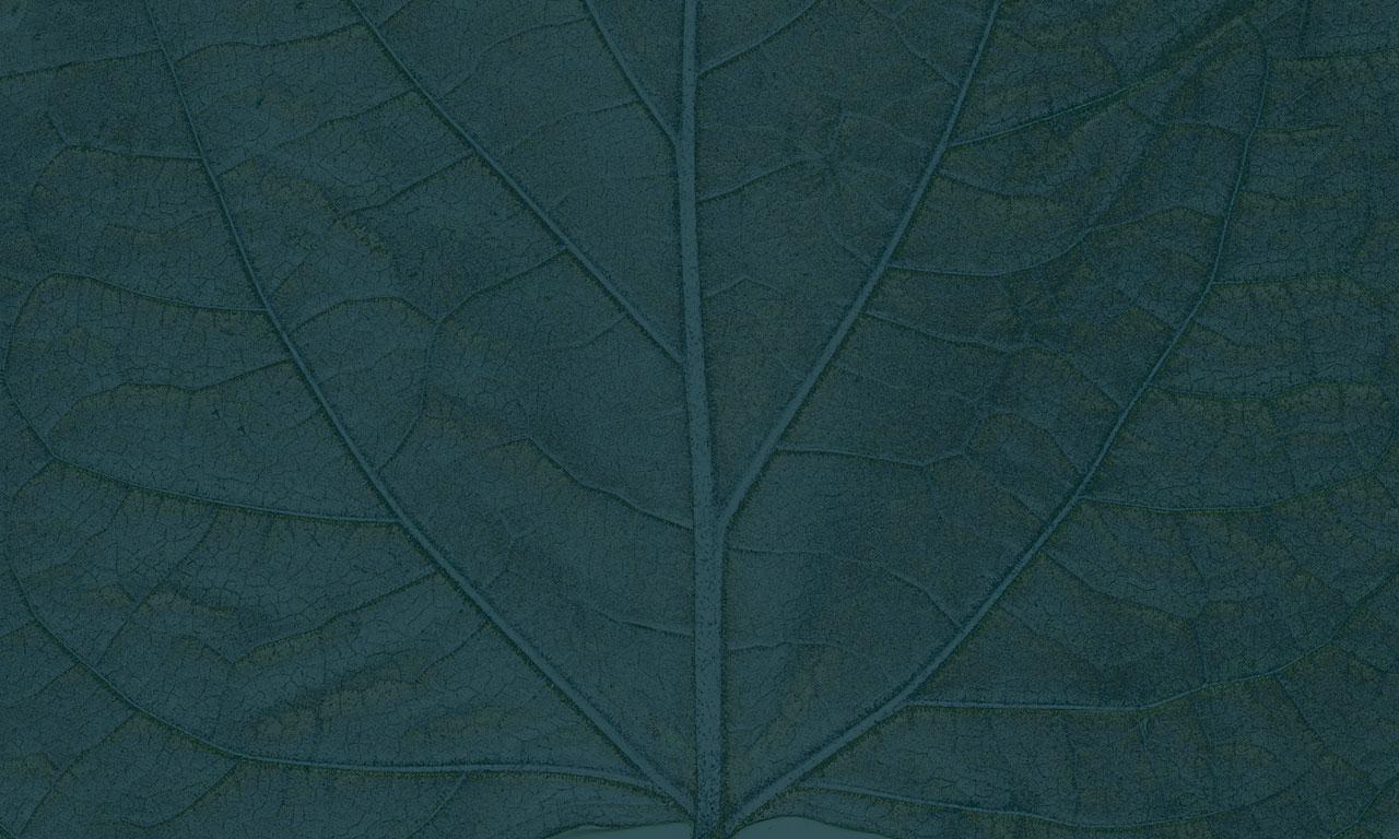 carta-parati-Dahon-texture2