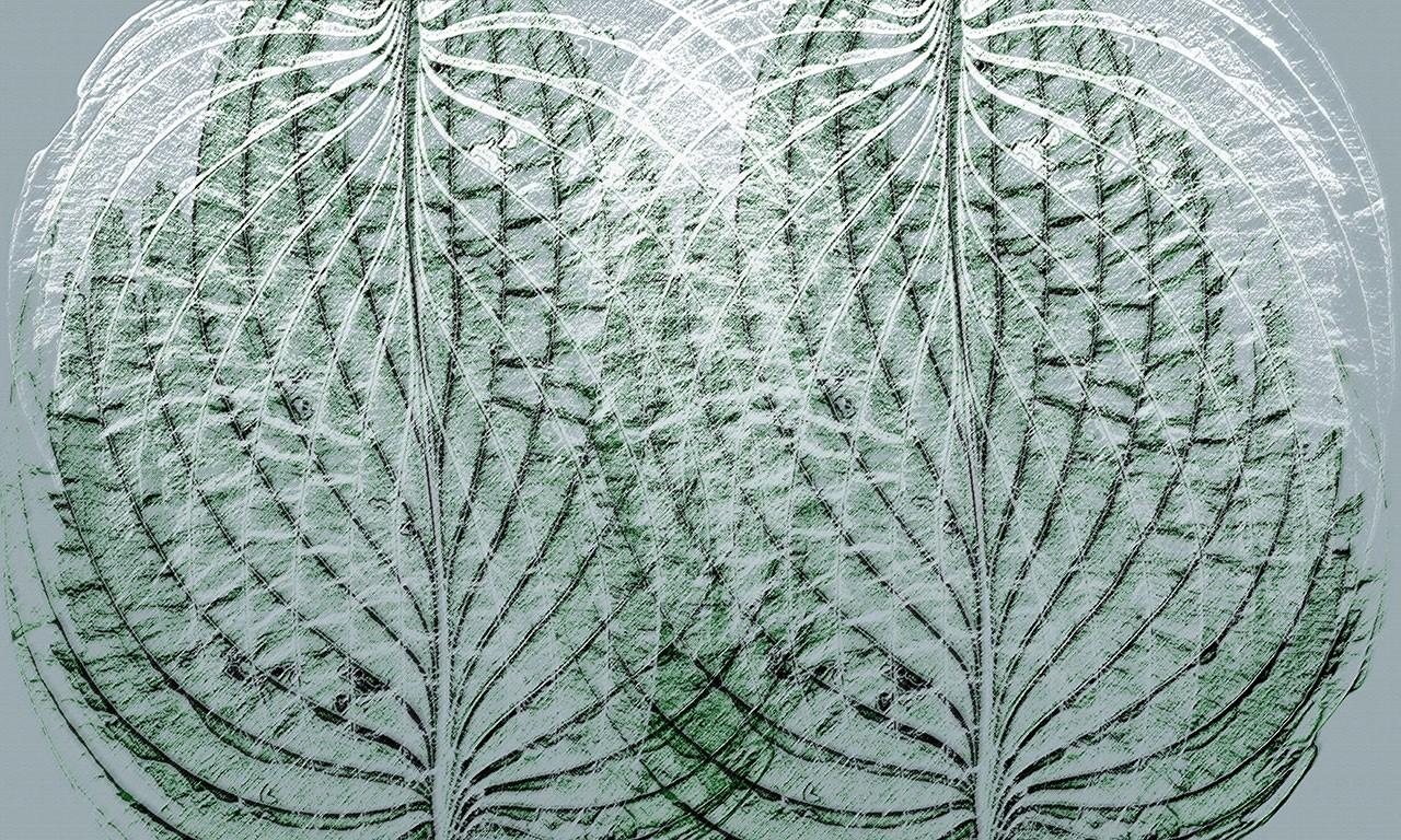 carta-parati-leaf-texture2