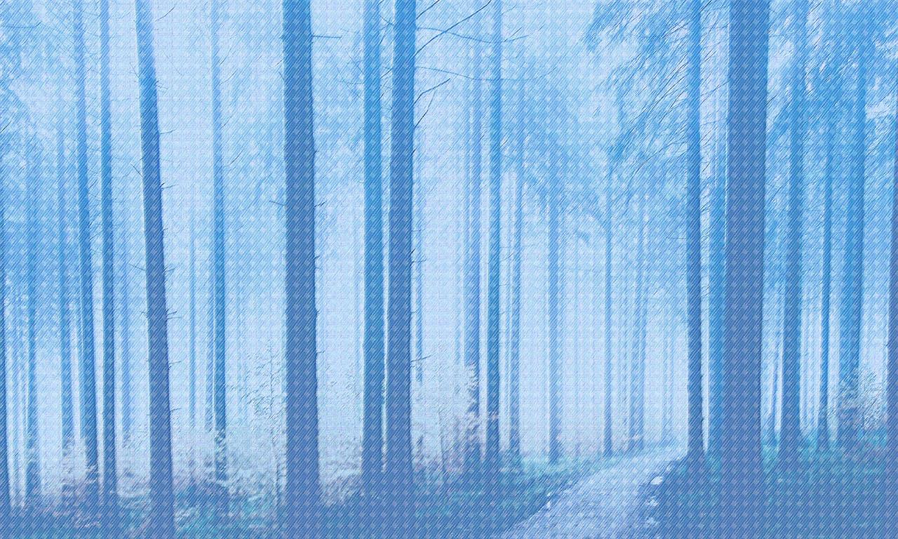 carta parati design forest texture
